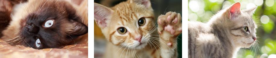 Vaccinations_cat