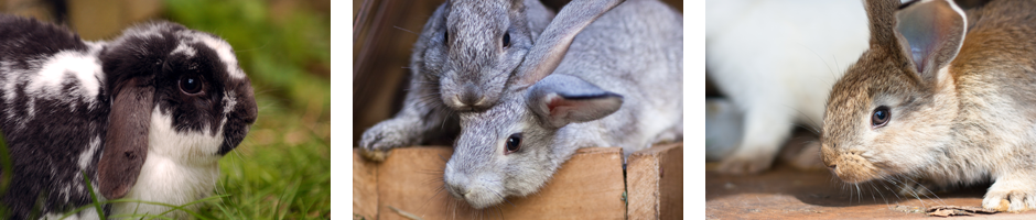 Vaccinations_rabbit